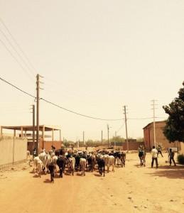 Troupeau dans Ouaga